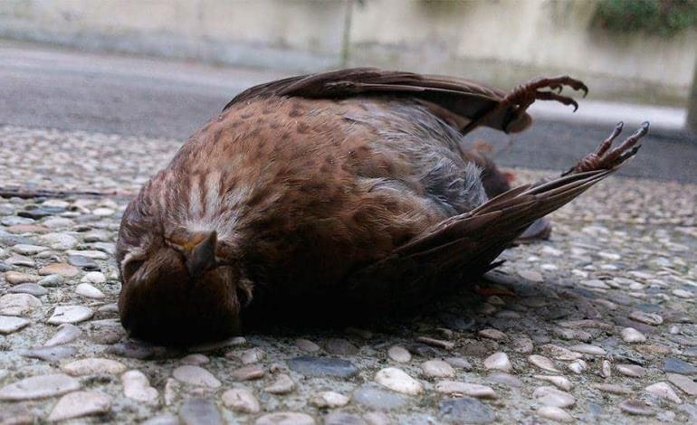 Muere fauna ante el calor