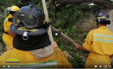 Bomberos retiraron un árbol desplomado