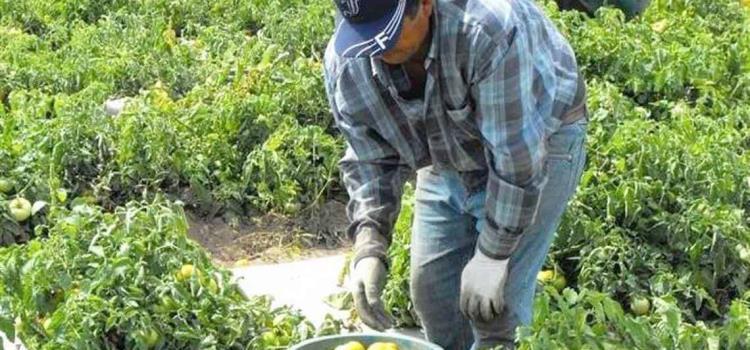 Suspenden programa de jornaleros agrícolas