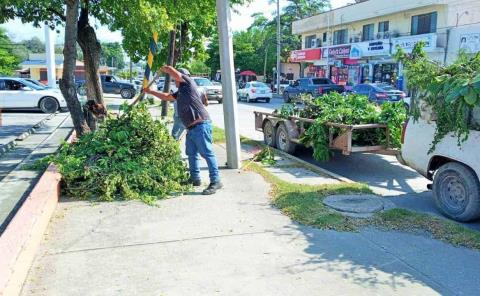 Poda y limpieza en avenida PAS