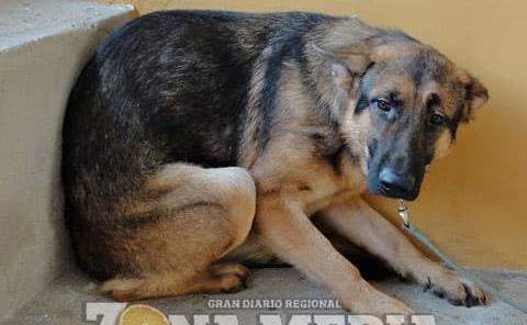 Fuegos artificiales afectan a perros