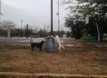Perros callejeros problema público