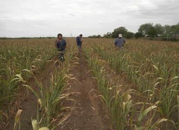 Campo en crisis por falta de lluvias