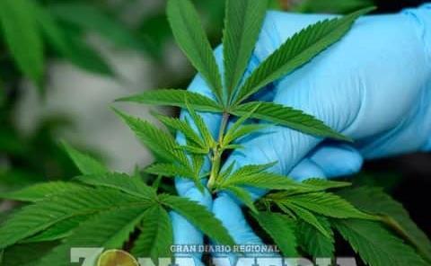 Habrá conversatorio sobre la marihuana