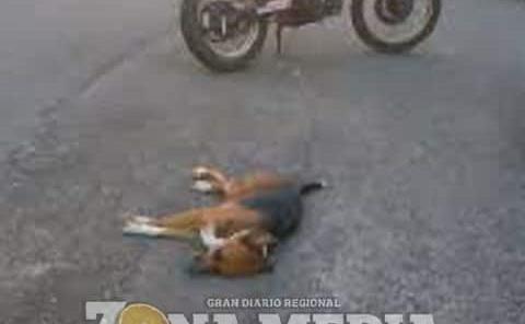 Motociclista cayó al atropellar perro