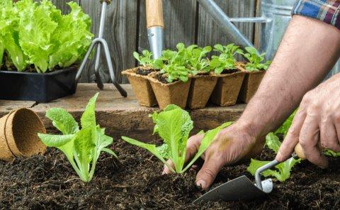 Enseñarán a crear huertos urbanos