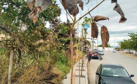 """Siguen sin """"adaptarse"""" los árboles sembrados"""