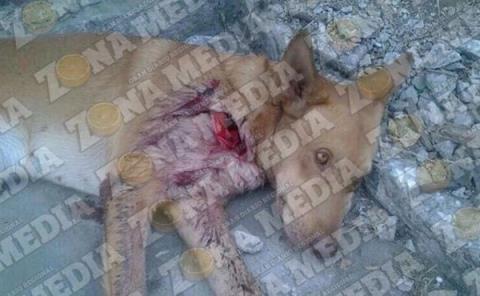 Nadie combate maltrato animal
